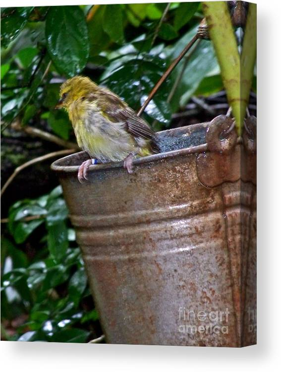 Bird Canvas Print featuring the photograph After The Bath by Carol Bradley