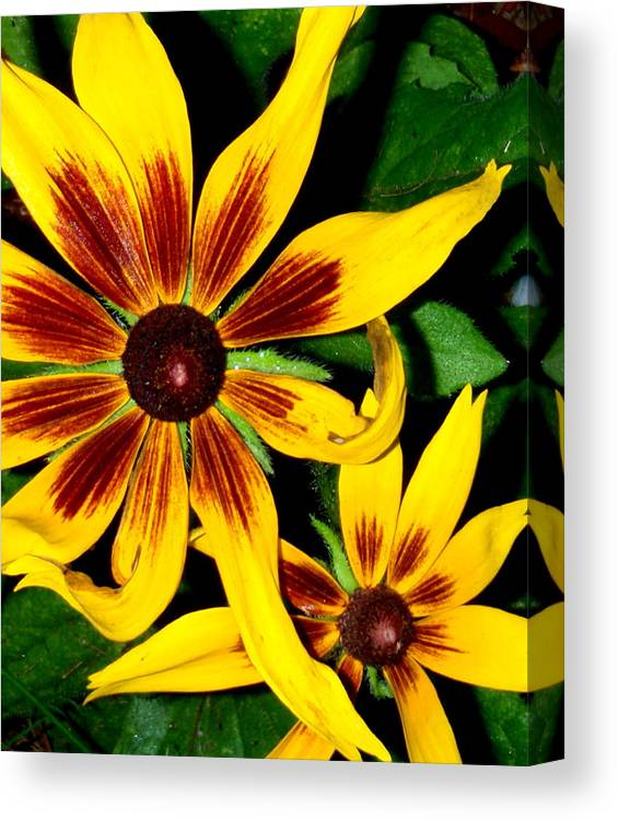 Bright Canvas Print featuring the photograph Brown Eyed Girls by Debbie May