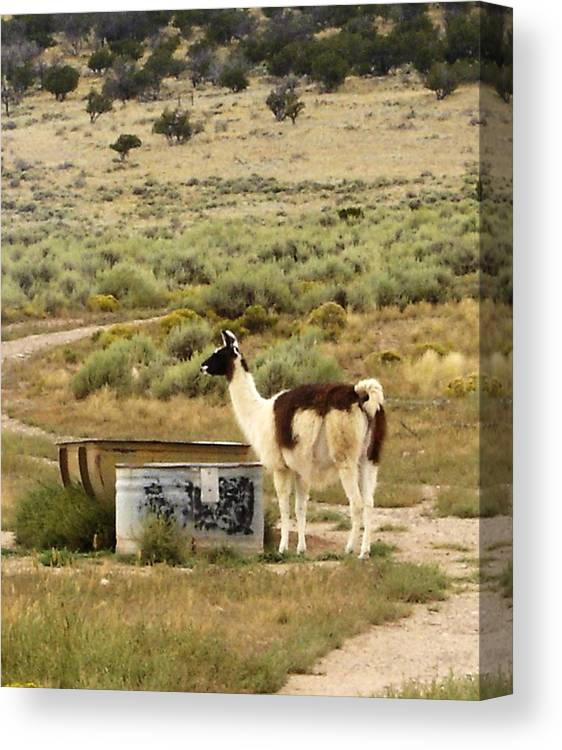 Llama Canvas Print featuring the photograph Llama Land by Mary Rogers