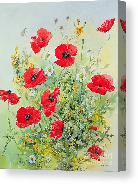 Flowers; Botanical; Flower; Poppies; Mayweed; Leaf; Leafs; Leafy; Flower; Red Flower; White Flower; Yellow Flower; Poppie; Mayweeds Canvas Print featuring the painting Poppies And Mayweed by John Gubbins