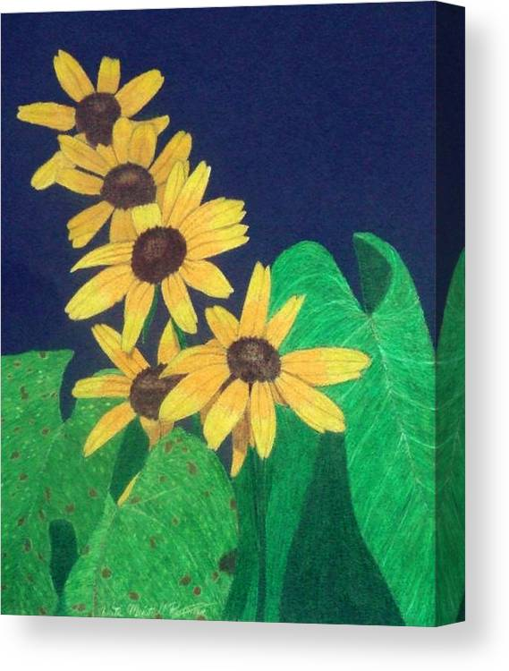 Black-eyed Susan Canvas Print featuring the drawing Summers End by Anita Putman