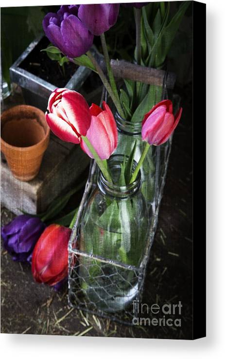 Barn Canvas Print featuring the photograph Beautiful Spring Tulips by Edward Fielding