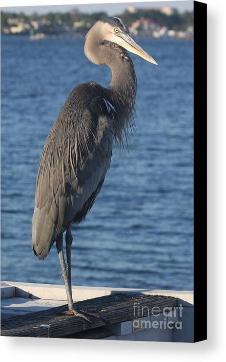 Heron Canvas Print featuring the photograph Great Blue Heron by Christiane Schulze Art And Photography