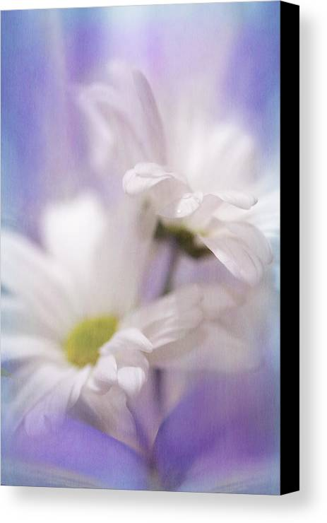 Flowers Canvas Print featuring the photograph Iris Daisy by Janice Sullivan