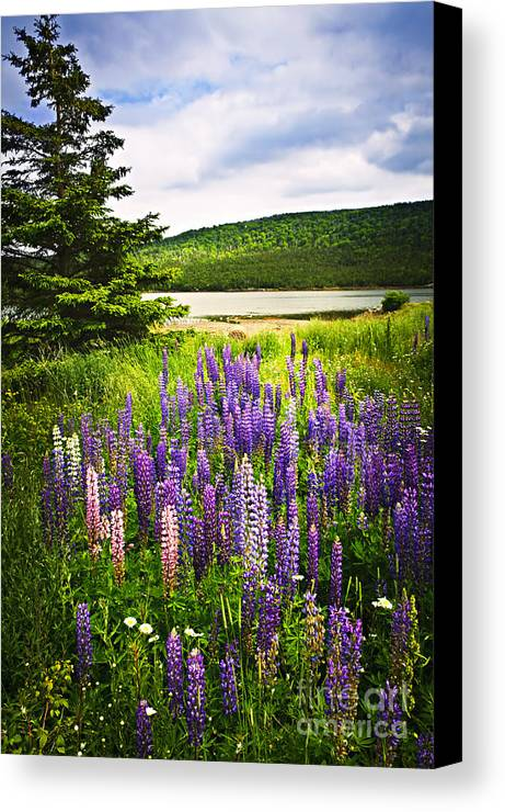 Flowers Canvas Print featuring the photograph Lupin Flowers In Newfoundland by Elena Elisseeva