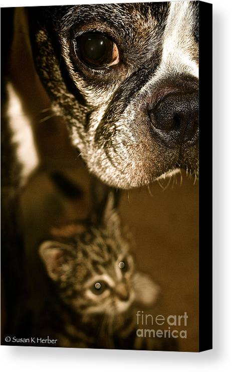 Animal Canvas Print featuring the photograph Mine by Susan Herber
