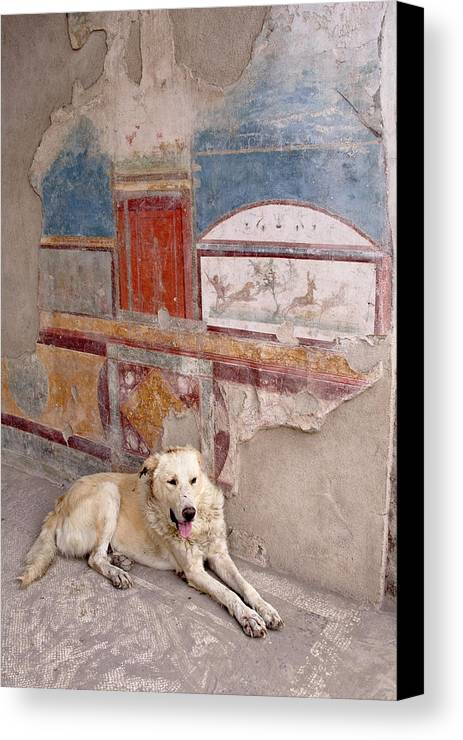 Ancient Canvas Print featuring the photograph Italy, Campania, Pompeii by Jaynes Gallery