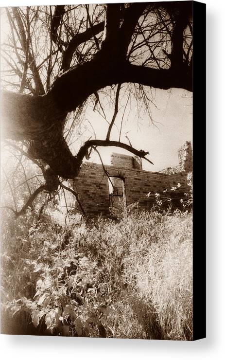 Photograph Canvas Print featuring the photograph Reaching by Laura Stretz