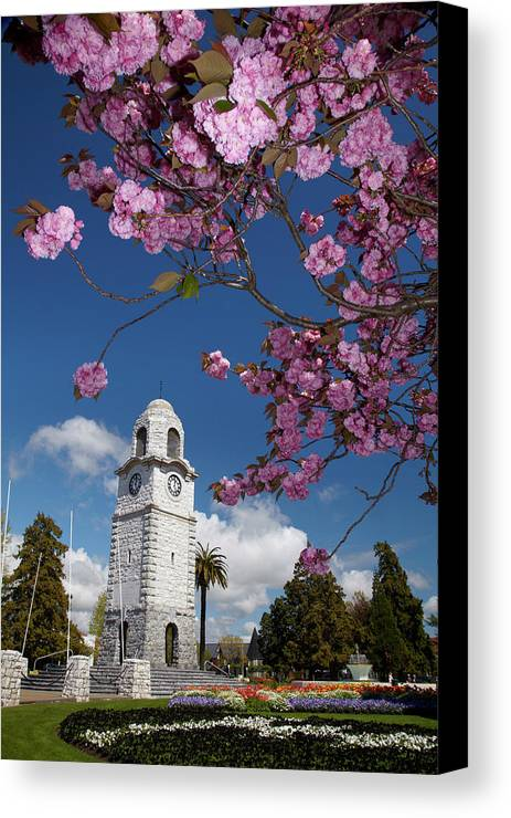 Blenheim Canvas Print featuring the photograph Spring Blossom And Memorial Clock by David Wall