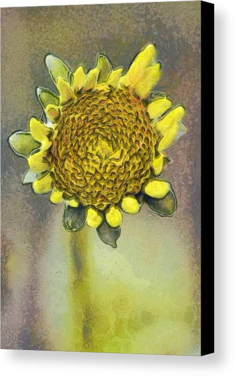 Spring Canvas Print featuring the painting The Sunflower by Odon Czintos