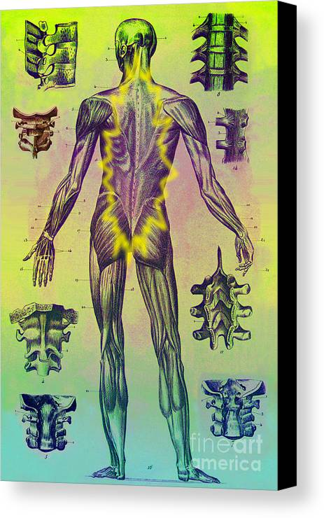 Medical Canvas Print featuring the photograph Vertebrae by Dennis D. Potokar