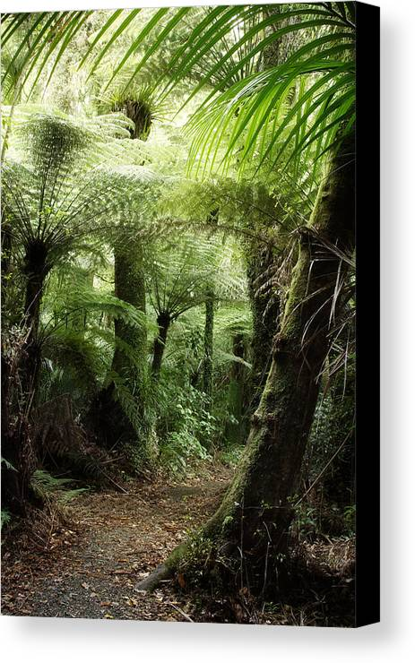 Forest Canvas Print featuring the photograph Jungle by Les Cunliffe