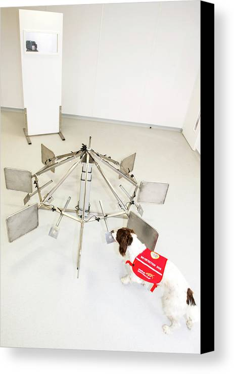 Animal Canvas Print featuring the photograph Cancer Detection Dog Training by Louise Murray