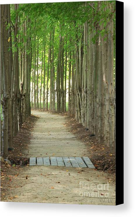 Path Canvas Print featuring the photograph A Path To... by Lucy Raos