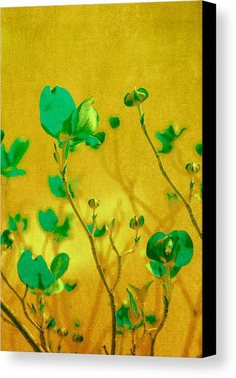 Freesia Canvas Print featuring the photograph Abstract Dogwood by Bonnie Bruno