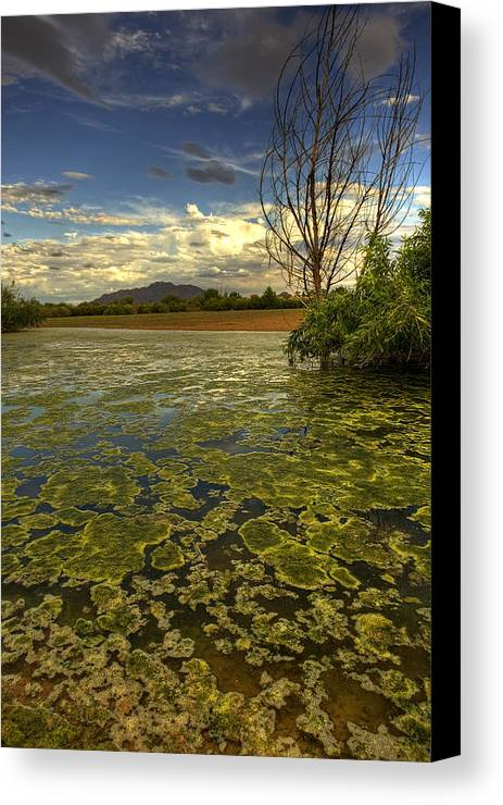 Dusk Canvas Print featuring the photograph A Sea Of Green by Sue Cullumber