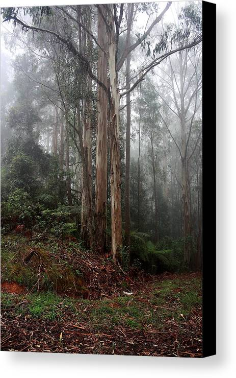 Obligatory Canvas Print featuring the photograph After The Rain. by Ian Ramsay