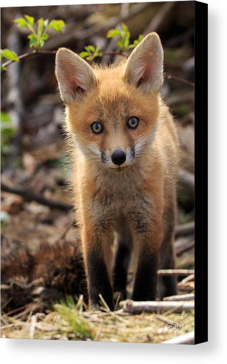Red Canvas Print featuring the photograph Baby In The Wild by Everet Regal