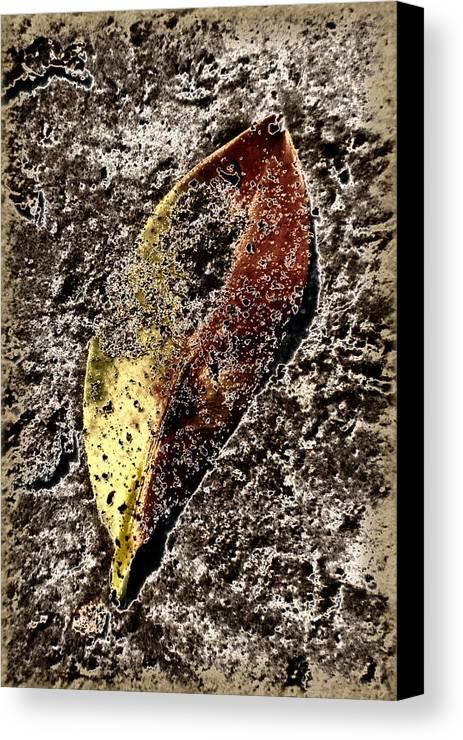 Leaf Canvas Print featuring the photograph Beach Leaf by Geraldine Alexander
