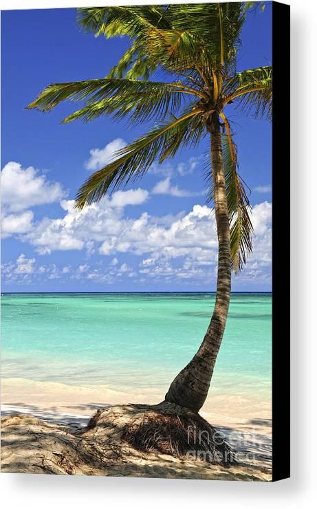 Beach Canvas Print featuring the photograph Beach Of A Tropical Island by Elena Elisseeva