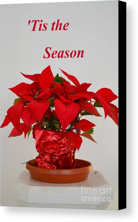 Poinsettia.mexico Canvas Print featuring the photograph Beautiful Poinsettia Plant - No 2 by Mary Deal