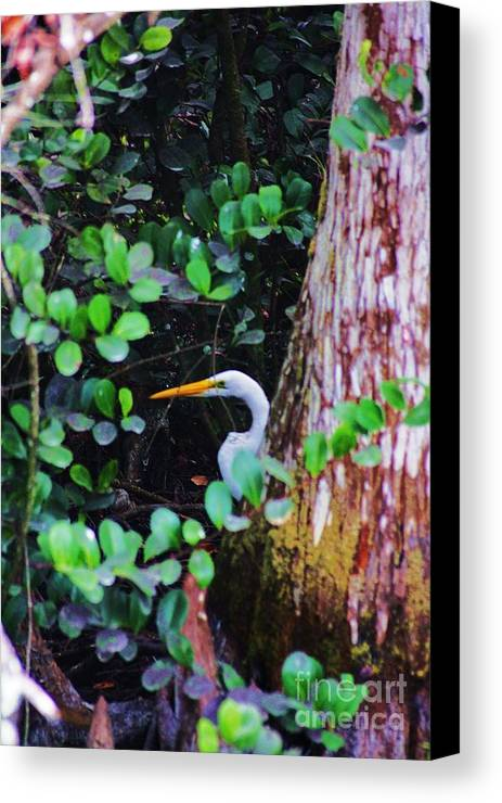 Egret Canvas Print featuring the photograph Behind The Tree by Chuck Hicks
