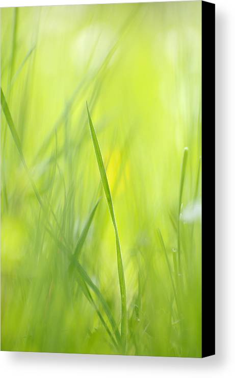 Spring Canvas Print featuring the photograph Blades Of Grass - Green Spring Meadow - Abstract Soft Blurred by Matthias Hauser