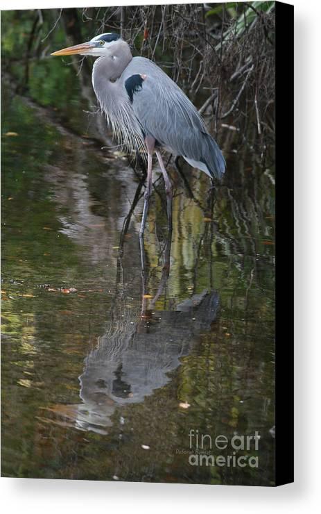 Blue Heron Canvas Print featuring the photograph Blue 1212 by Deborah Benoit