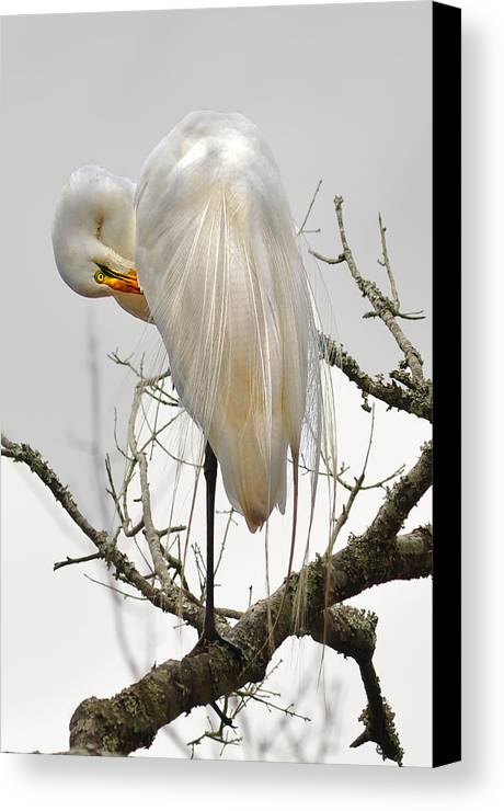 Canvas Print featuring the photograph Bride Of Magnolia by Donnie Smith