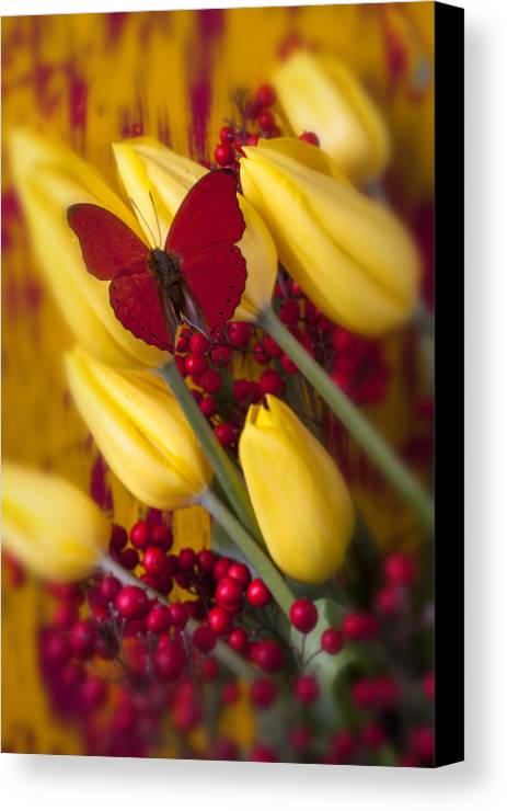Red Canvas Print featuring the photograph Buttery At Rest by Garry Gay