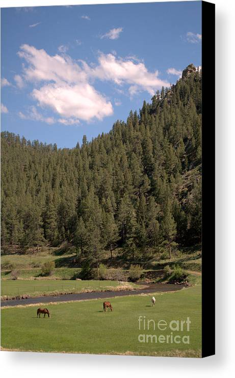Horses Canvas Print featuring the photograph By The River by Anjanette Douglas