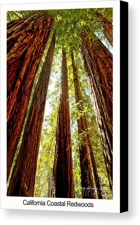Redwoods Canvas Print featuring the photograph California Coastal Redwoods by Artist and Photographer Laura Wrede