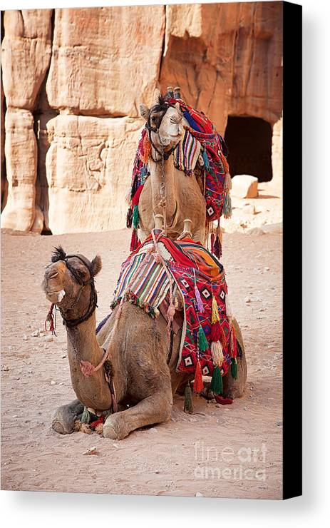 Ancient Canvas Print featuring the photograph Camels In Petra by Jane Rix