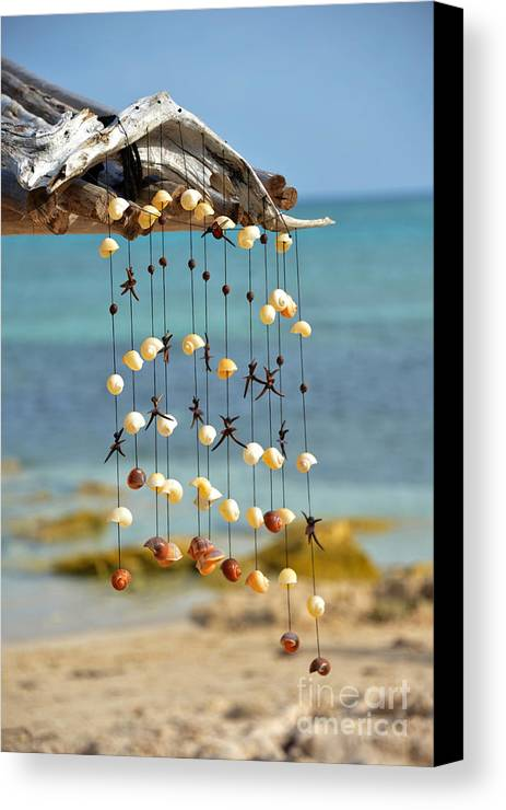 Snails And Shells From Mahahual Canvas Print featuring the photograph Caracolitos by Salvador Penaloza
