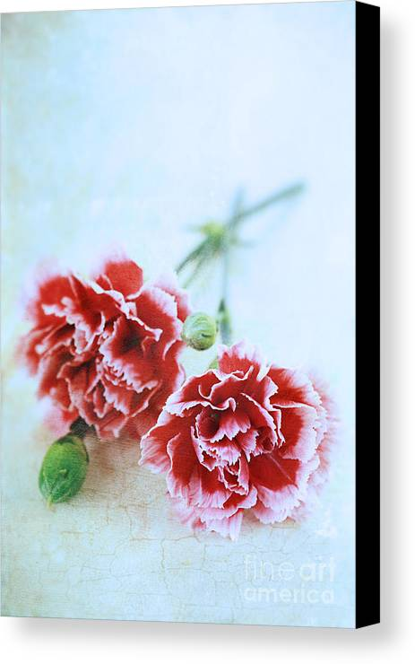 Colour Canvas Print featuring the photograph Carnations by Stephanie Frey