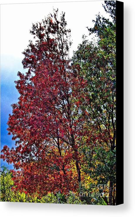 Colors Canvas Print featuring the photograph Changing Colors by Gary Richards