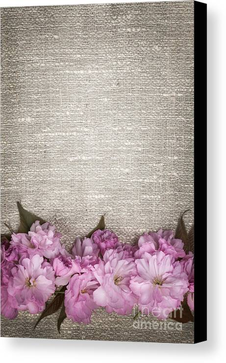 Cherry Blossoms Canvas Print featuring the photograph Cherry Blossoms On Linen by Elena Elisseeva