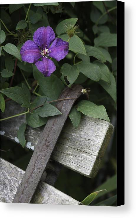 Flower Canvas Print featuring the photograph Clematis On Bench by Kevin Snider