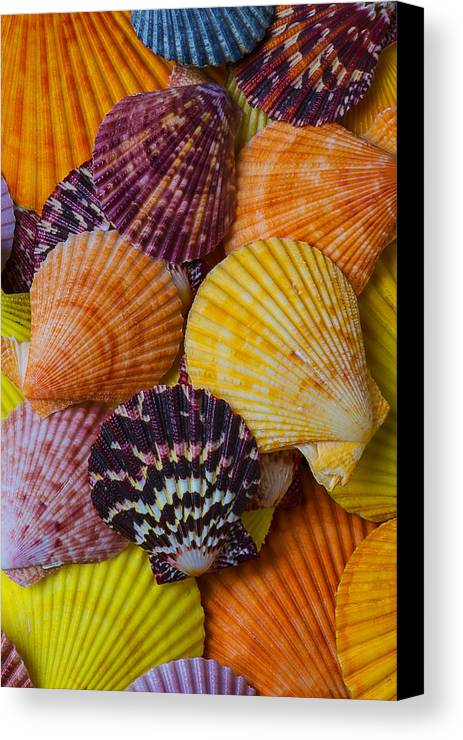 Colorful Shell Canvas Print featuring the photograph Colorful Shells by Garry Gay