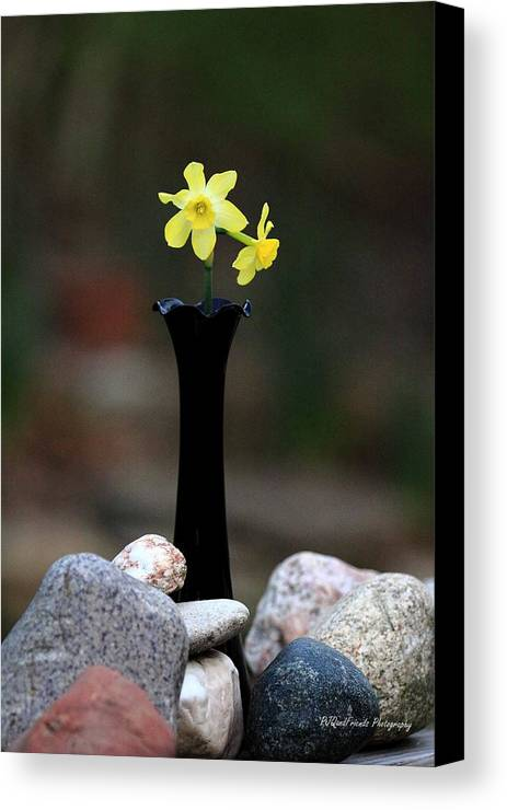 Daffodils In Black Amethyst 2 Canvas Print featuring the photograph Daffodils In Black Amethyst 2 by PJQandFriends Photography