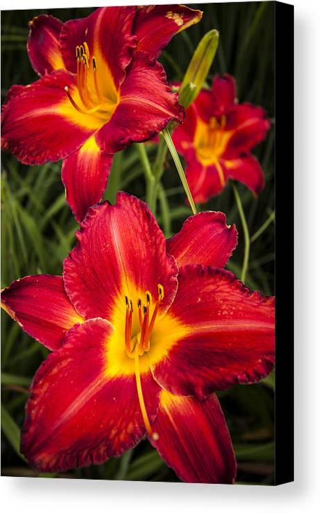 3scape Photos Canvas Print featuring the photograph Day Lilies by Adam Romanowicz