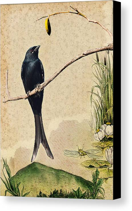 Drongo Canvas Print featuring the photograph Drongo by Milind Waichal