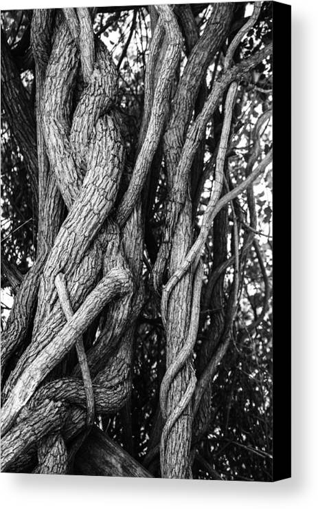 Tree Canvas Print featuring the photograph Embracing Rooted Love by Luna Curran