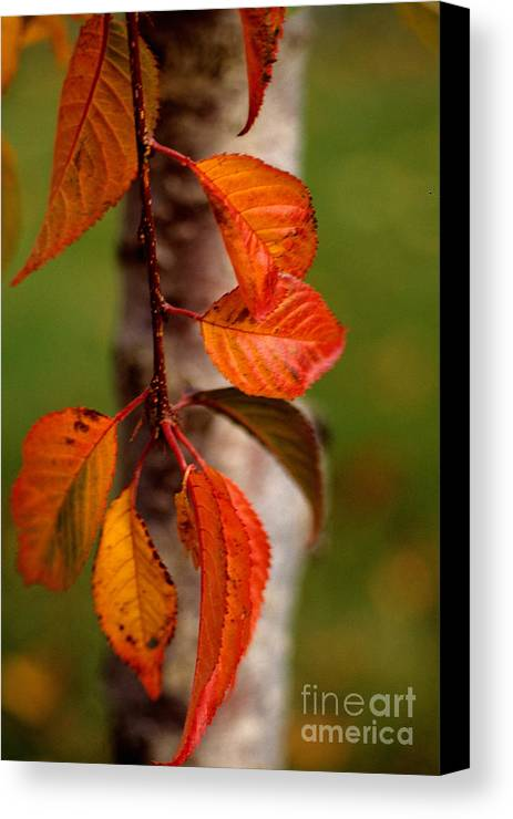 Fall Canvas Print featuring the photograph Fall Beauty by Sharon Elliott