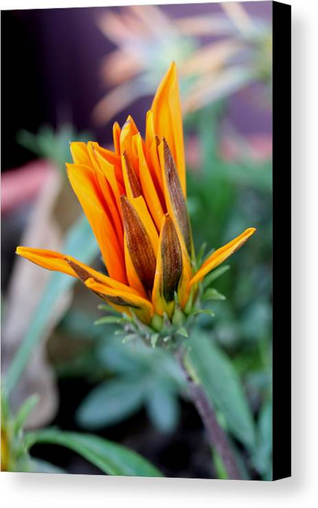 Flowers Canvas Print featuring the photograph Flowers by Shishir Bansal