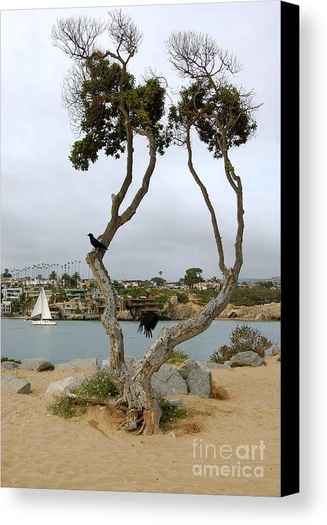 Newport Beach Canvas Print featuring the photograph Fly Black Bird Fly by Andrea Aycock