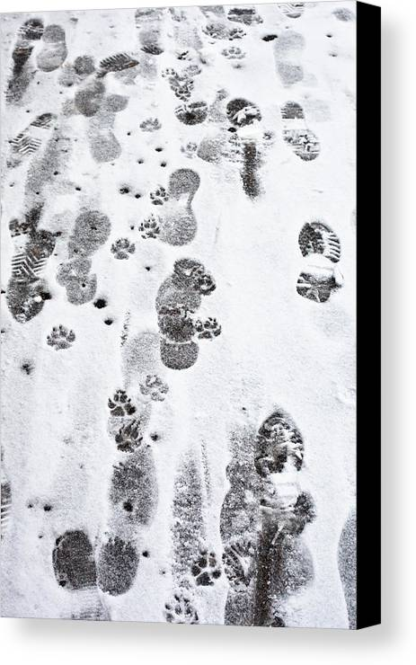 Animal Canvas Print featuring the photograph Footprints by Tom Gowanlock