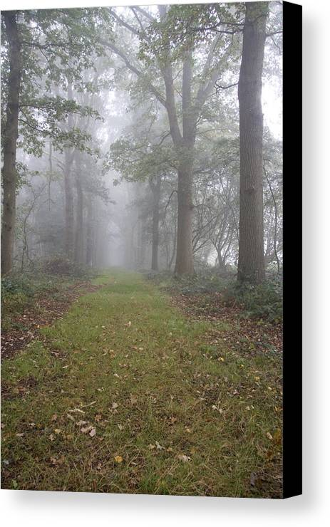 Forest Lane Canvas Print featuring the photograph Forest Lane by Ronald Jansen