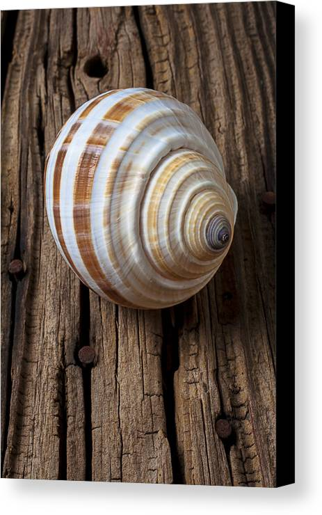 Sea Shell Canvas Print featuring the photograph Found Sea Shell by Garry Gay