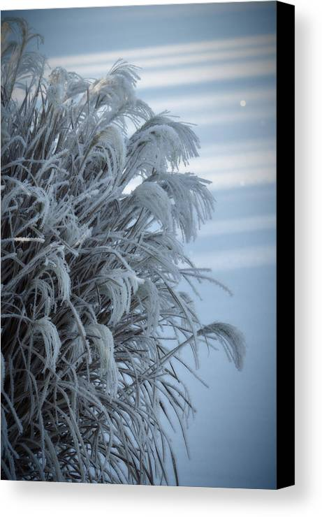 Bushes Canvas Print featuring the photograph Frost by Paulina Roybal